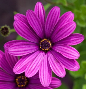Purple_flower_(4764445139)