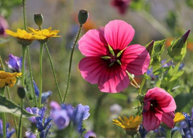 the-petals-4352131_960_720